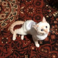 подстреленный котенок 2