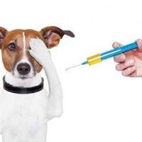 инъекция собаке