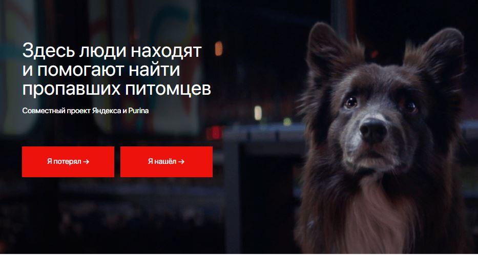 яндекс поиск животных