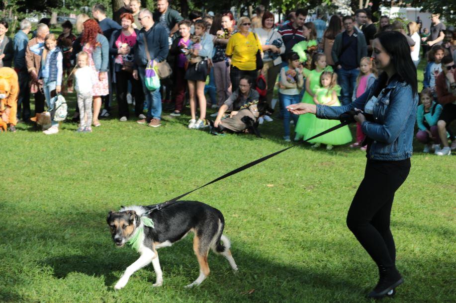 бездомная собака парад собак 2