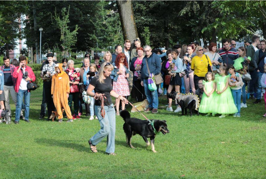 бездомная собака парад собак