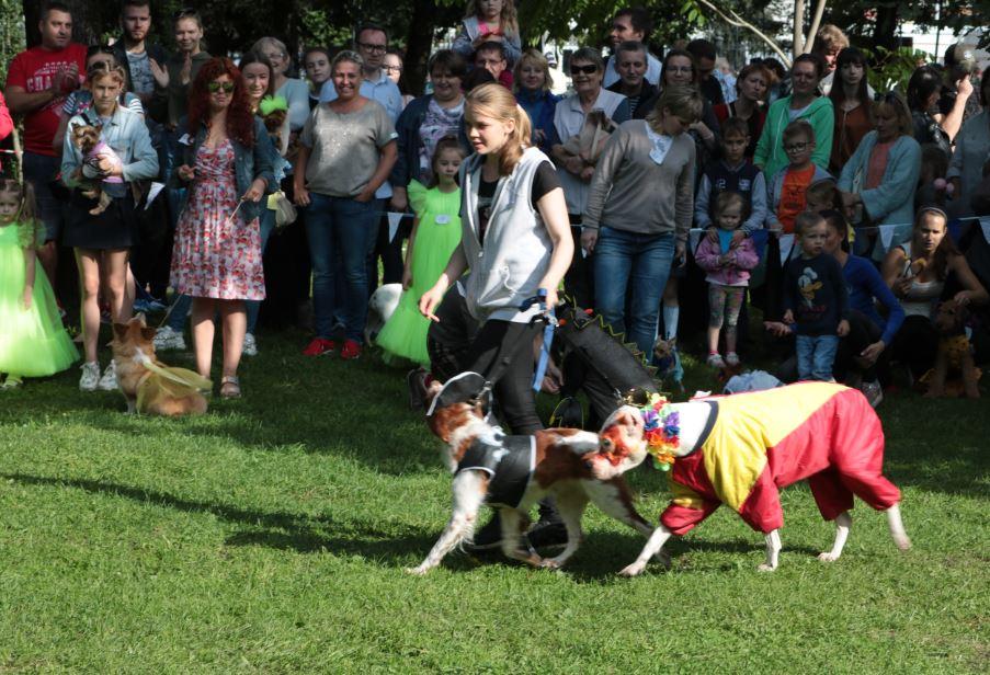 яркая парочка парад собак