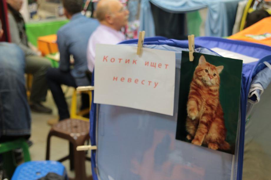 котик ищет невесту