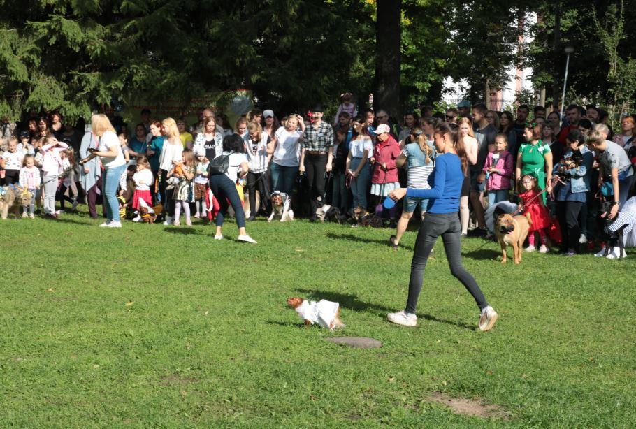 парад собак 2