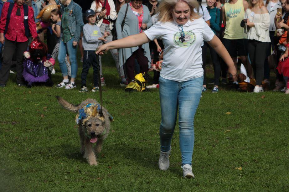 собака единорог парад собак