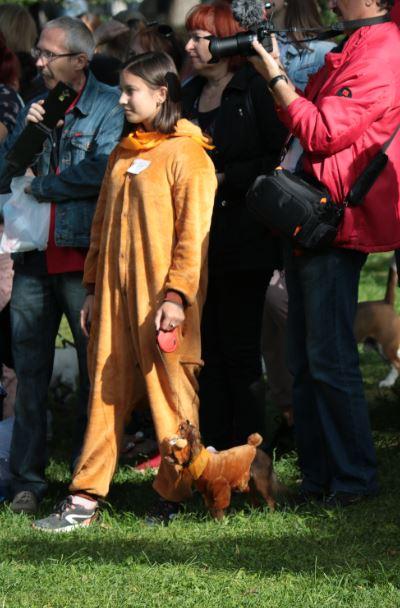 собака медведь парад собак