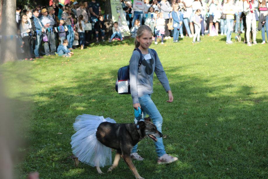 собака в юбке парад собак