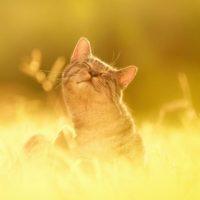 утомленная солнцем кошка
