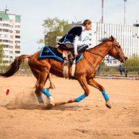 день лошади ипподром тверь