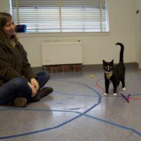 кошка эксперимент привязанность
