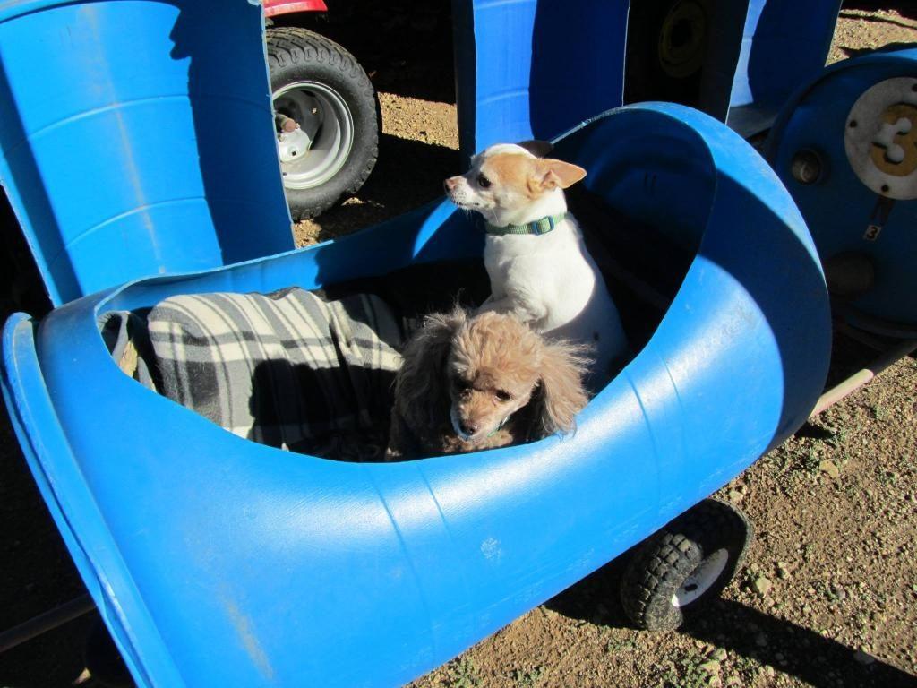 поезд для собак 3