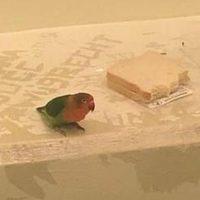 арестованный попугай 2