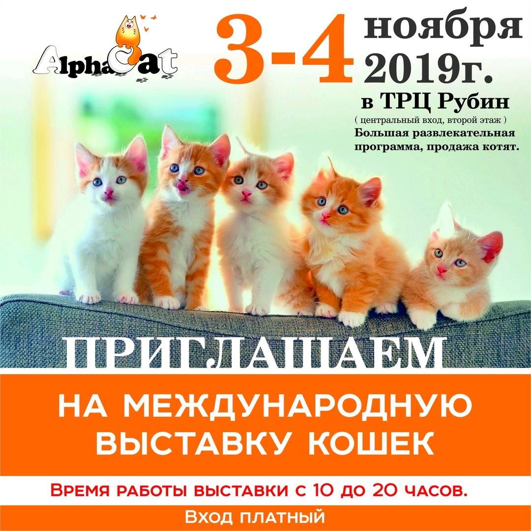 выставка кошек 3-4 ноября 2019
