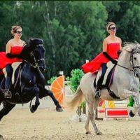 фестиваль с участием лошадей и пони 2
