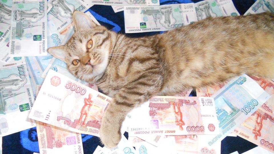 кот в рублях