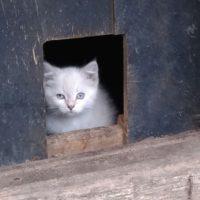 котенок в подвале 2