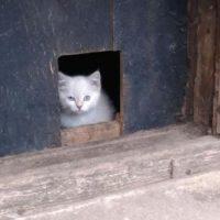 котенок в подвале