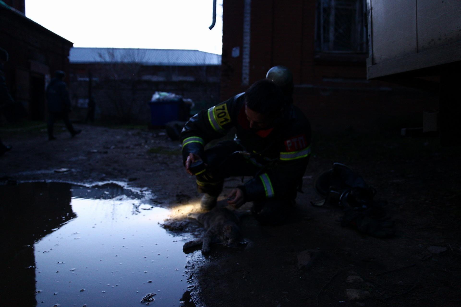 пожарный и кот 4