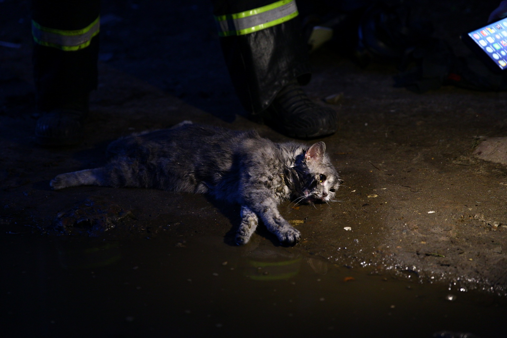 пожарный и кот 6
