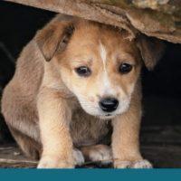 сбор помощи животным 2