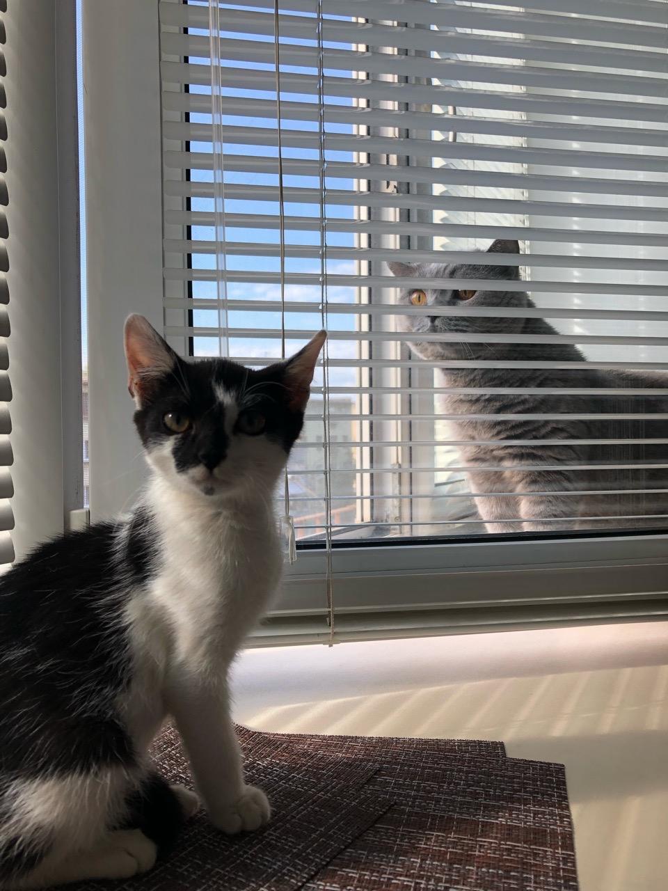 трехлапый котенок и кот 2