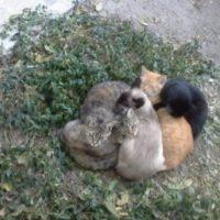 отравленные кошки