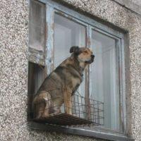 собака в окне