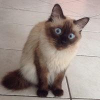 странная кошка