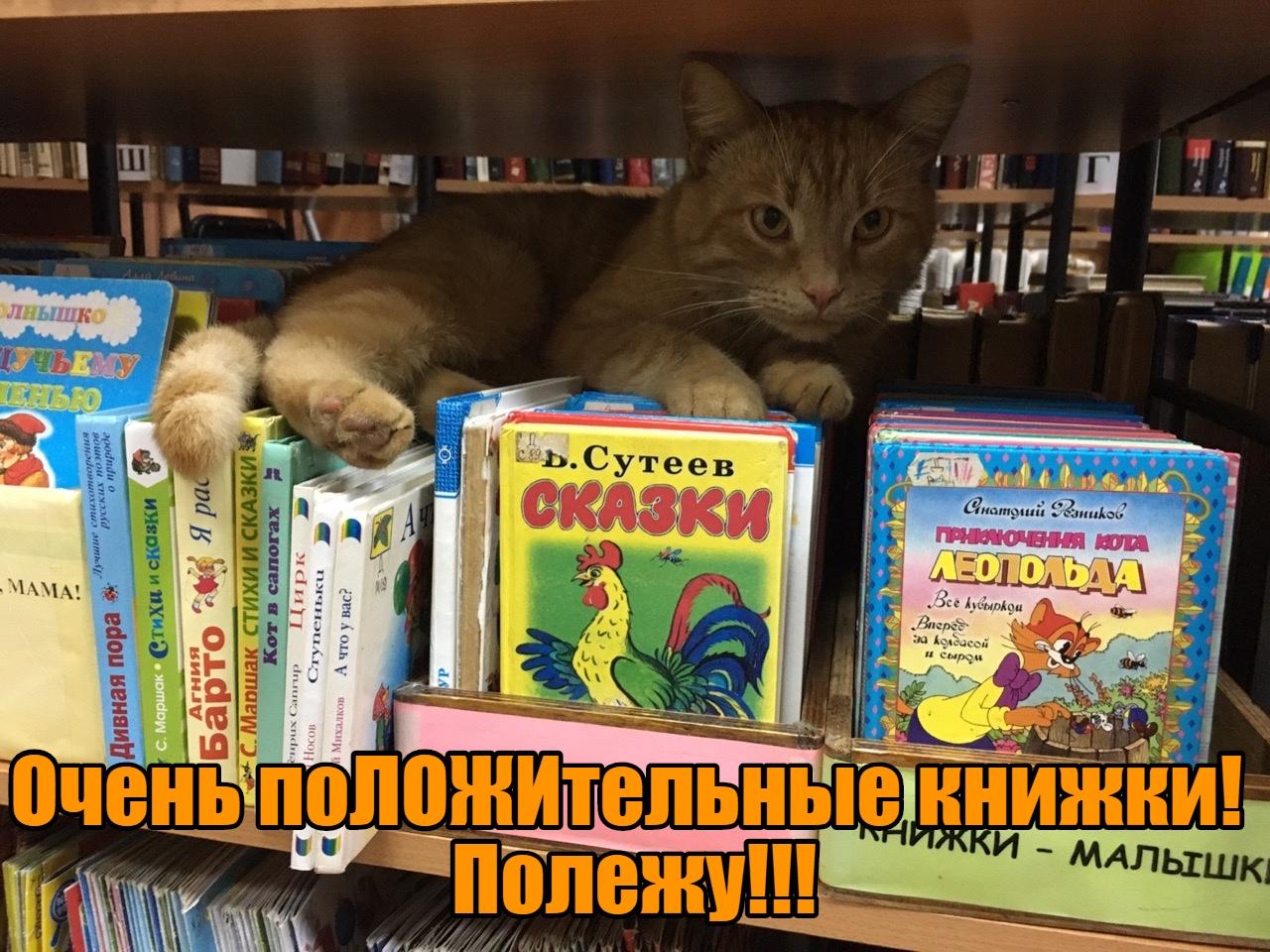 кот-библиотекарь 11