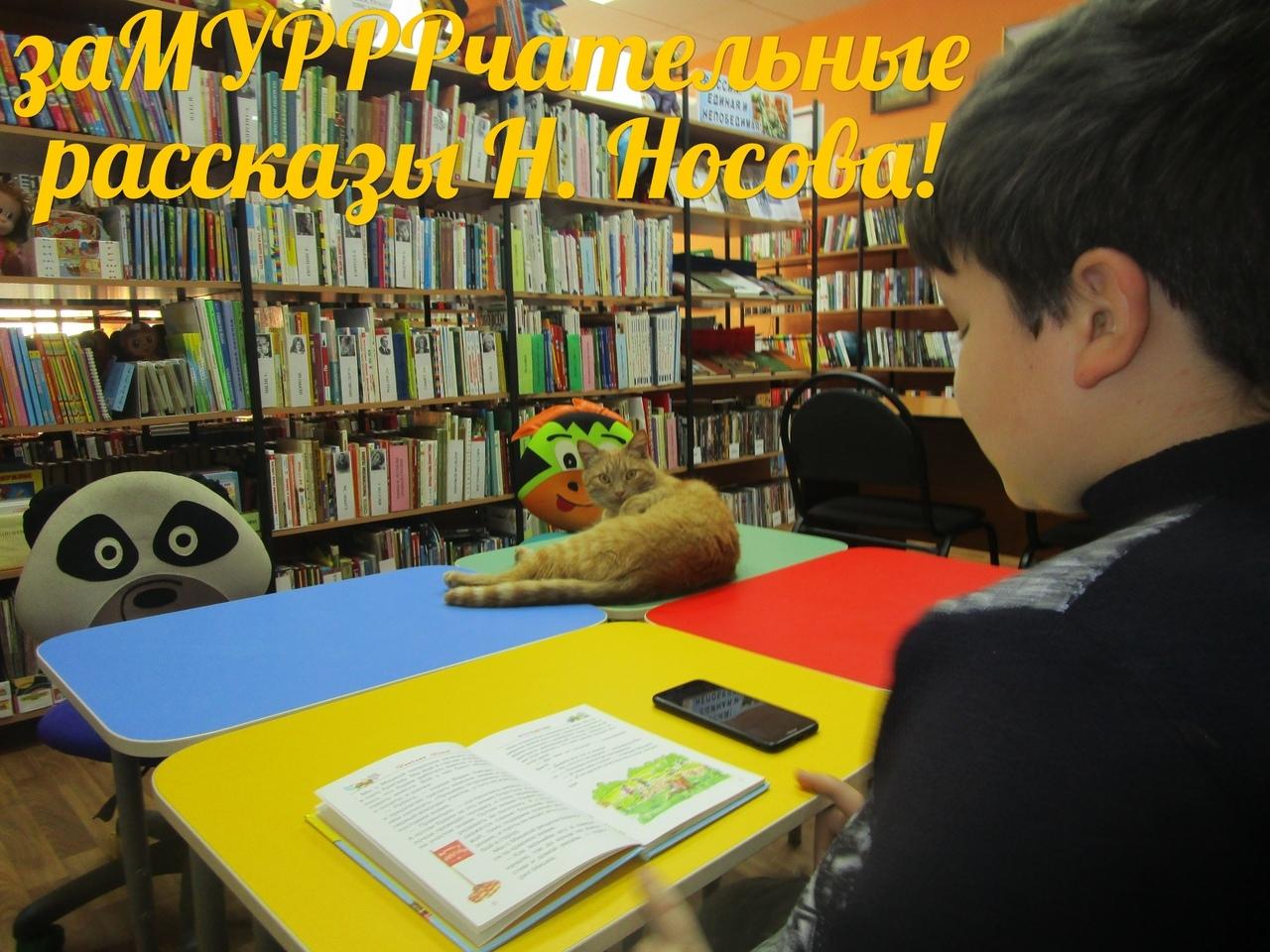 кот-библиотекарь 22