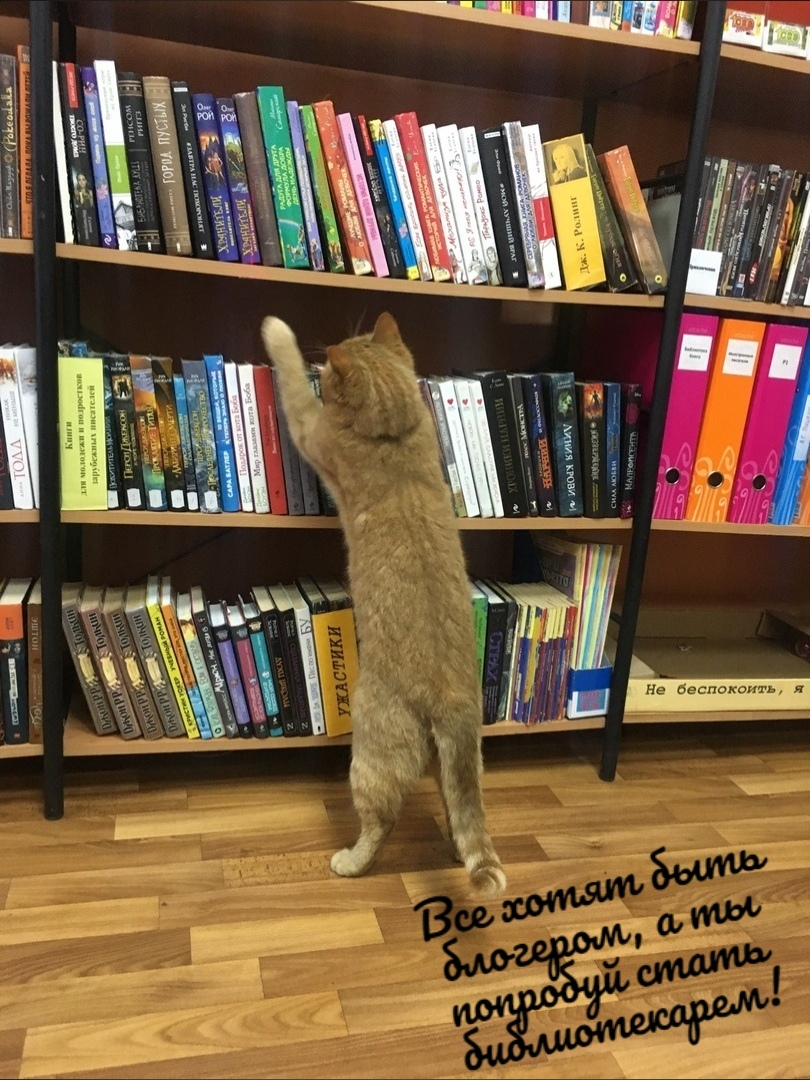 кот-библиотекарь 7