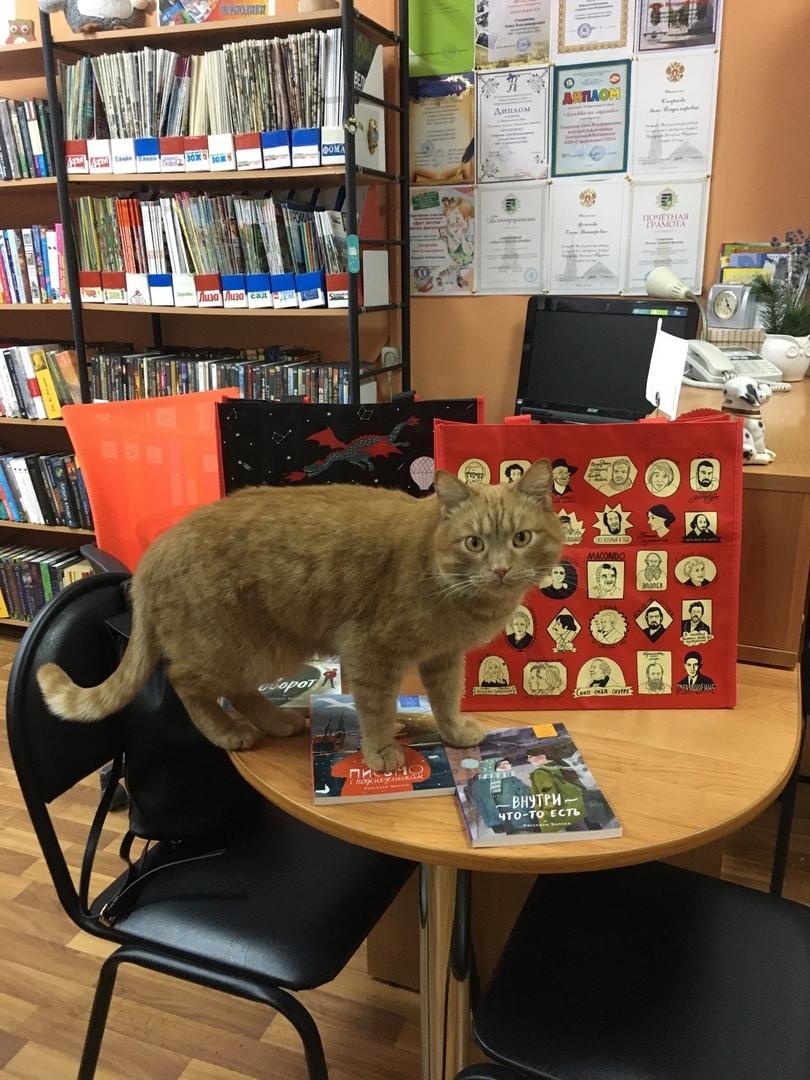 кот-библиотекарь 8