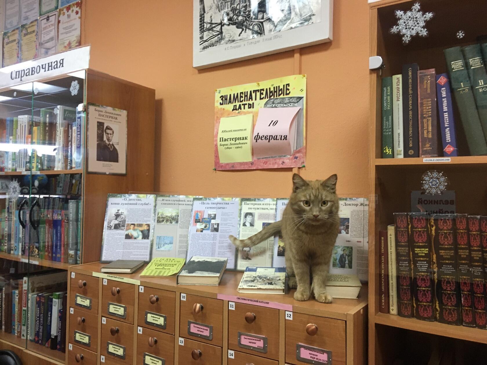 кот-библиотекарь 9