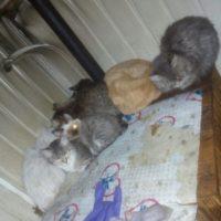 кошки из сгоревшего дома