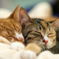 кошки спят