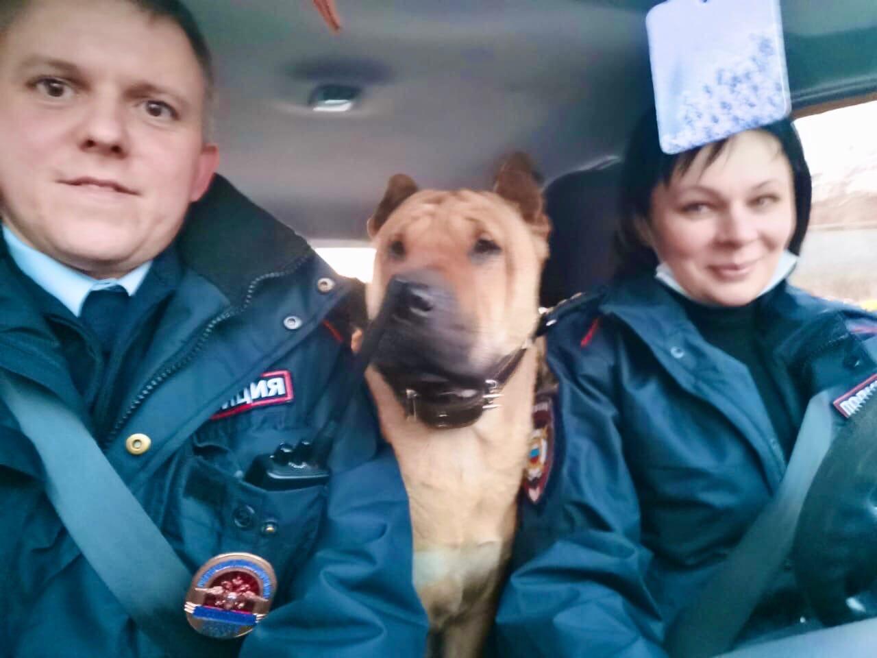 патрульная собака шарпей рич 2