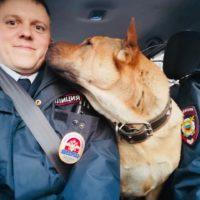 патрульная собака шарпей рич
