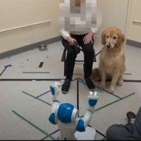 собаки и робот