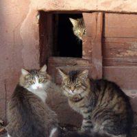 кошки в подвале