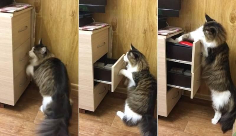 кот открывает тумбочку