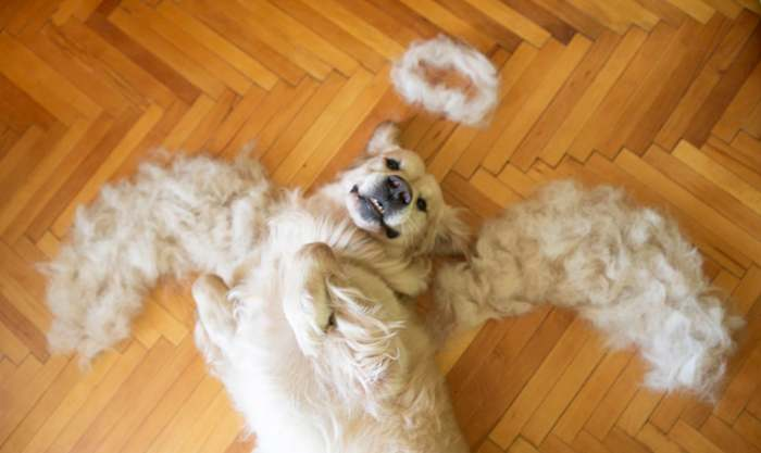 собака-ангелочек