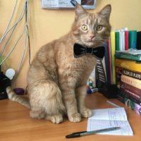 кот-библиотекарь 6