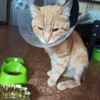 кот с травмой