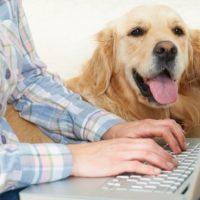 собака и хозяин за ноутбуком