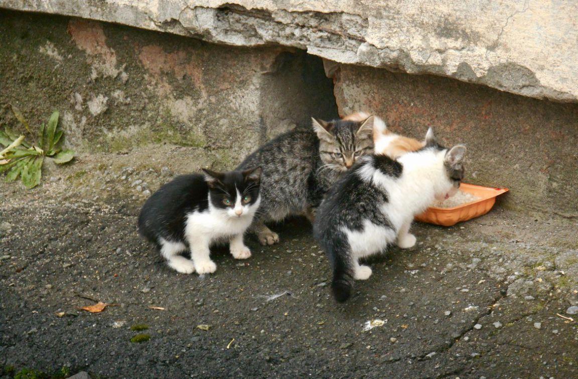 кормление кошек на улице