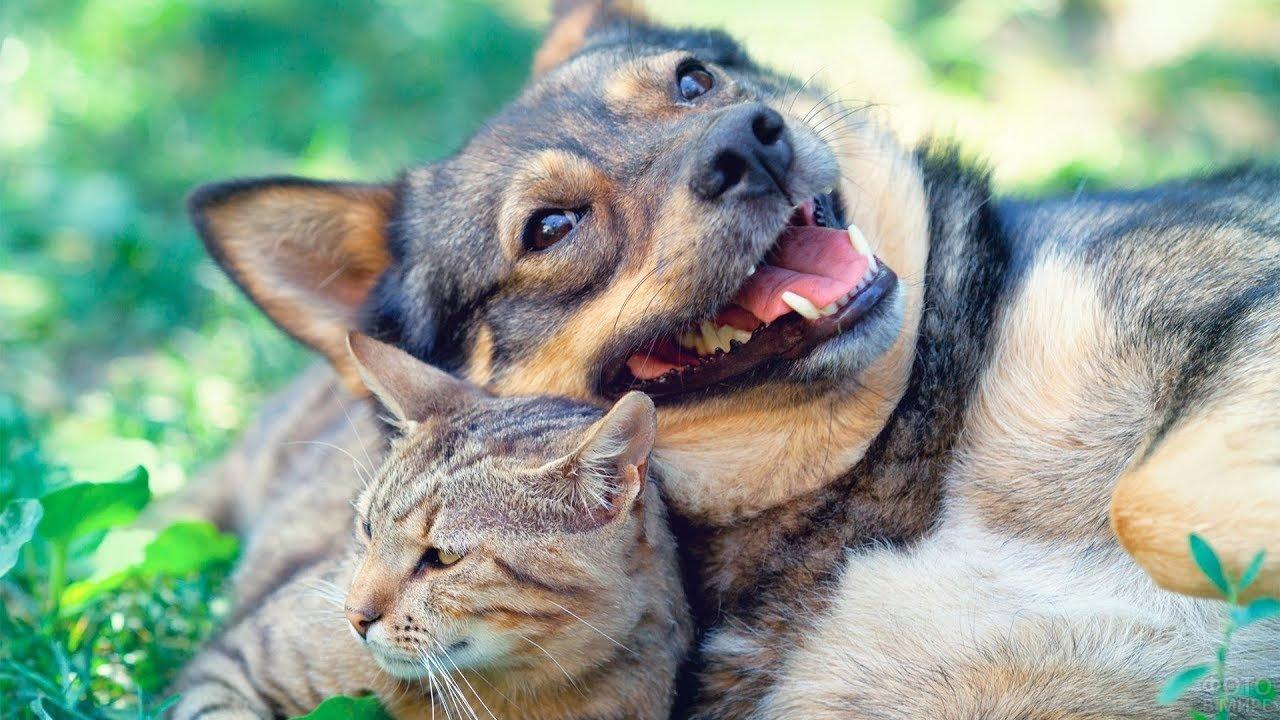 собака и кошка - ЗооТверь - Тверской справочно ...