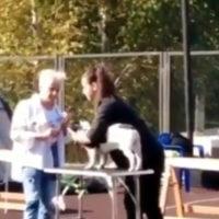 судья ударила собаку на выставке