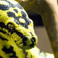 змея сергея салата