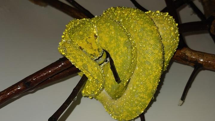 змея сергея салата 3