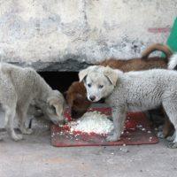 бездомные щенки едят